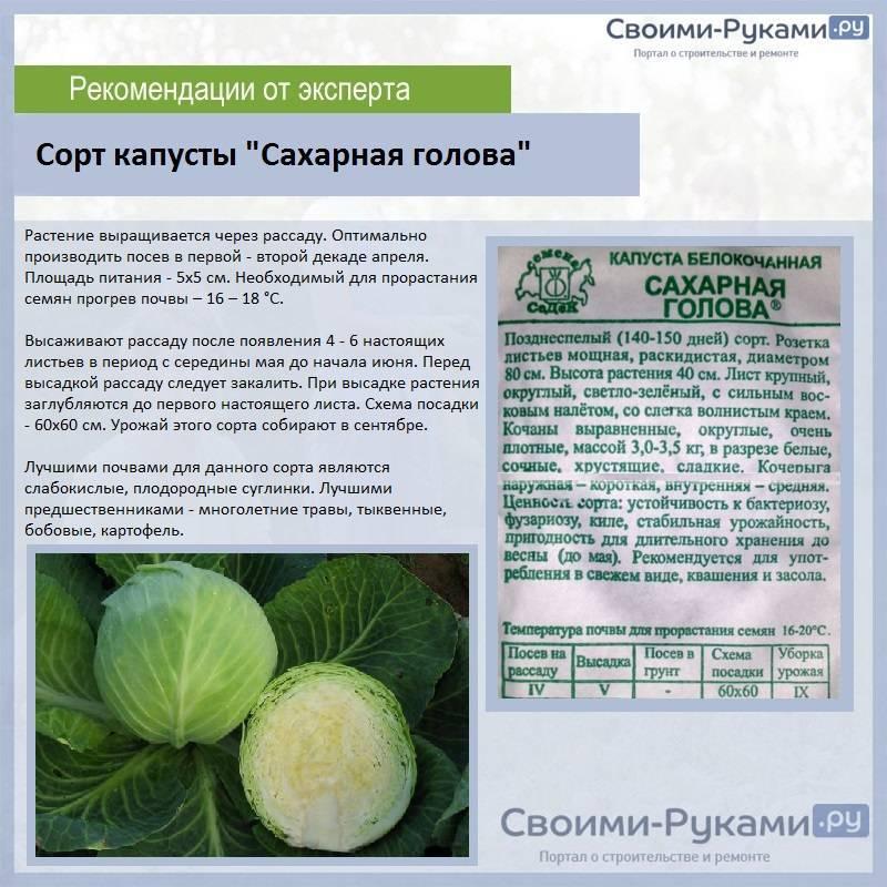 Лучшие сорта капусты для длительного хранения