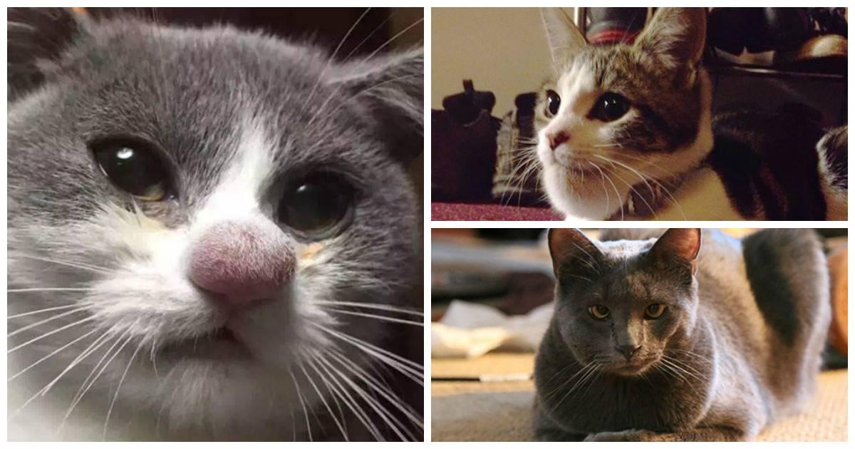 Кошку ужалила пчела (оса): первая помощь, последствия |  ветеринарная служба владимирской области
