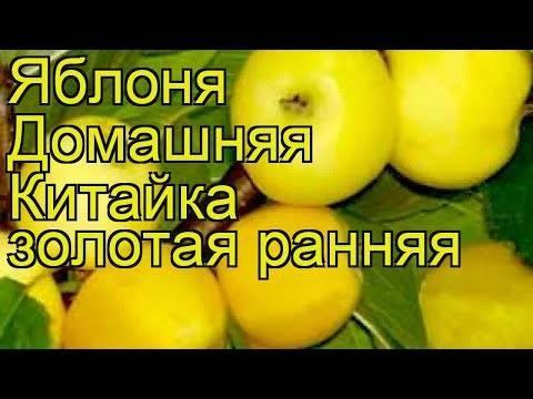 Описание сортов яблони китайка