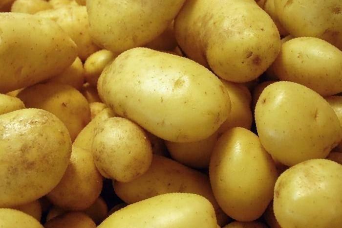Сорт картофеля «гала»: характеристики, качества и выращивание