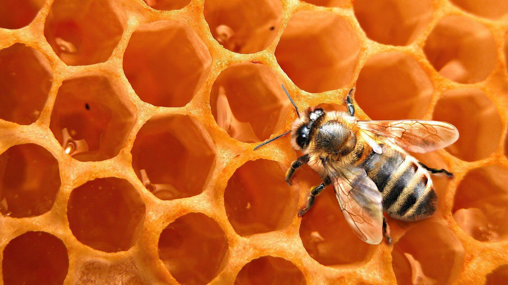 Сахарный сироп для пчел или медовая сыта ' пчелы '