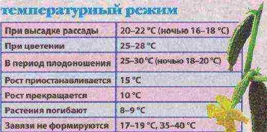 Какая температура нужна для рассады огурцов