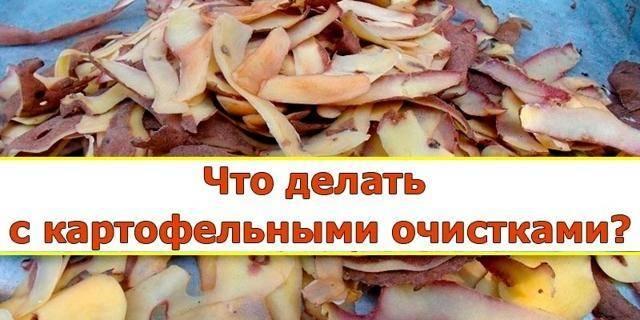Картофельные очистки как удобрение и подкормка для растений