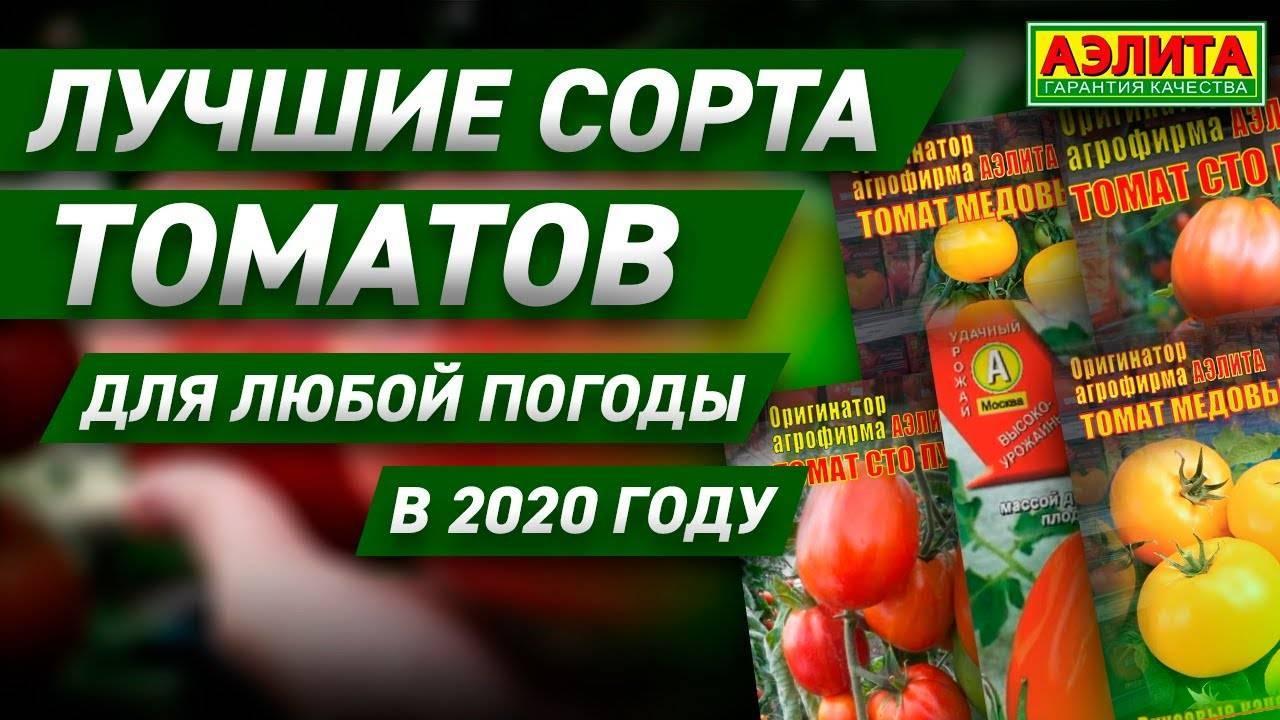Лучшие сорта помидоров для открытого грунта и теплицы в средней полосе россии