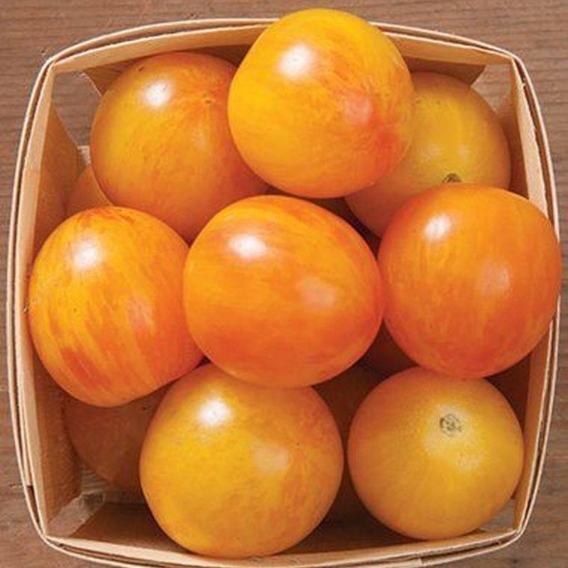 "Томат ""асвон f1"": фото и описание сорта, характеристики плодов-помидоров"