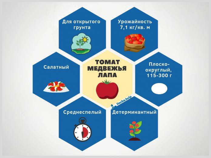 Описание томатов медвежья лапа с фото и отзывами огородников