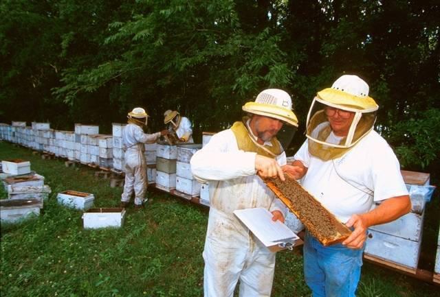 Стоит ли рассматривать пчеловодство как выгодный бизнес