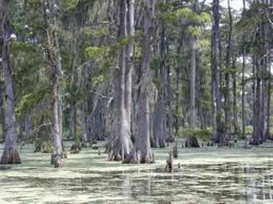 Какие деревья сбрасывают хвою