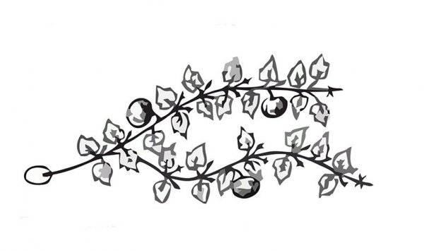 Как правильно формировать тыкву в открытом грунте
