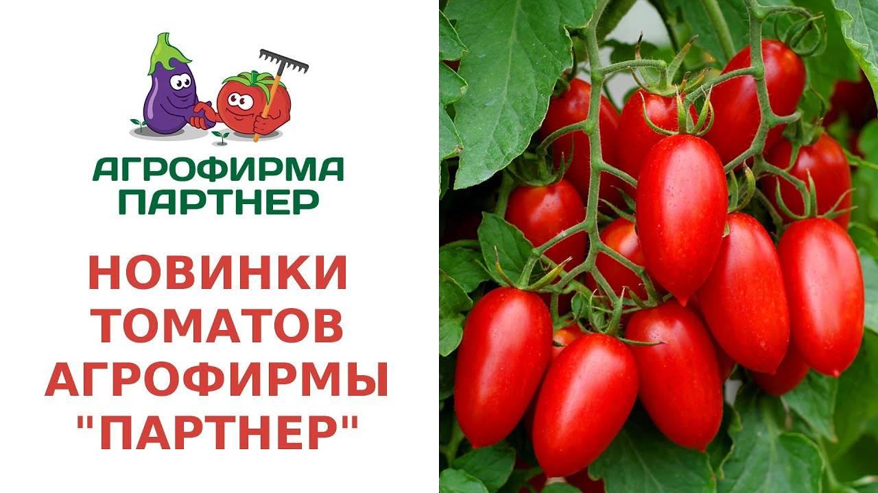 Какие семена томатов выбрать?