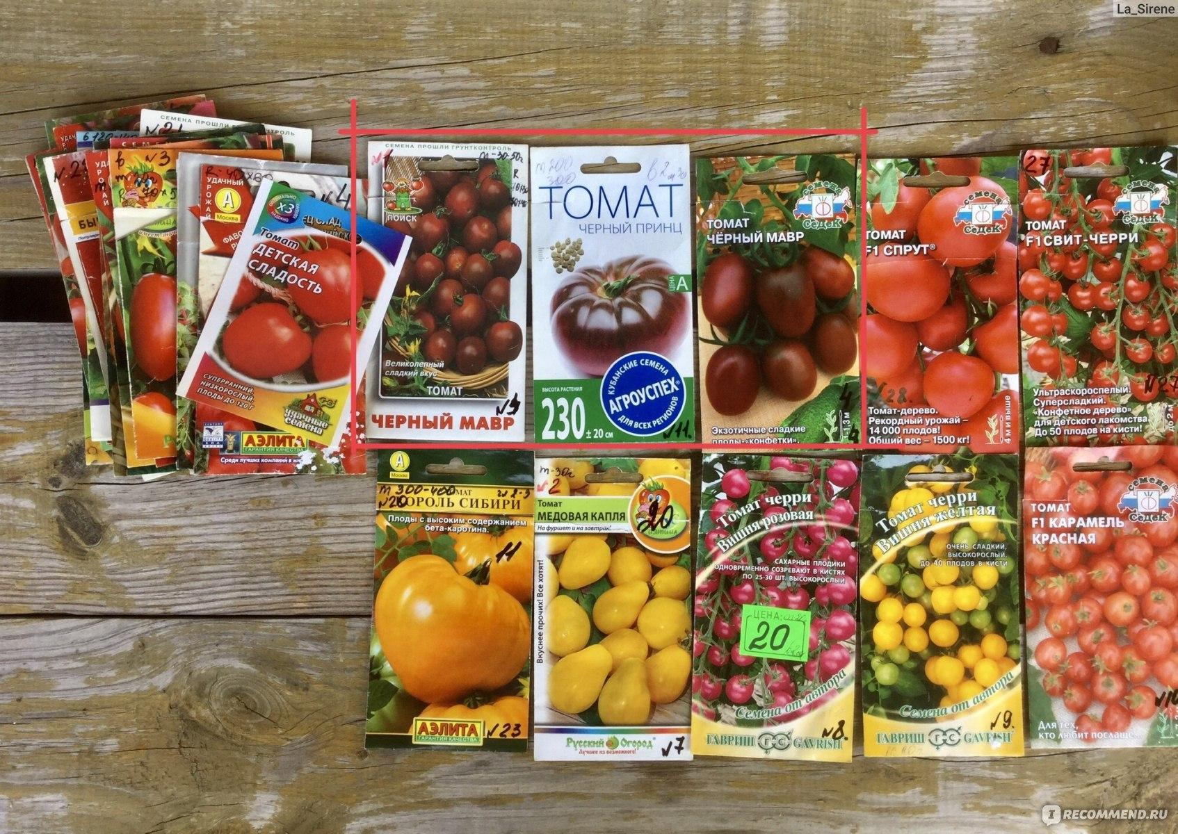"""Томат """"черная гроздь"""": описание сорта, характеристики плодов-помидоров, рекомендации по уходу и выращиванию, а так же фото и видео-материалы"""