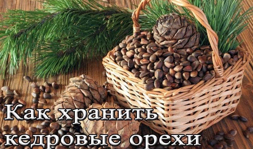Как правильно хранить кедровые орехи в домашних условиях
