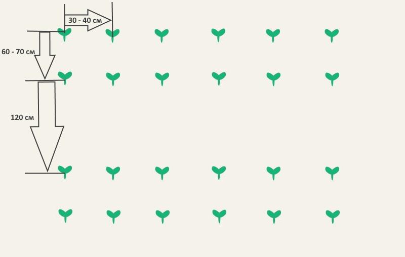 Способы выращивания кабачков через рассаду – пошаговая технология и важные моменты