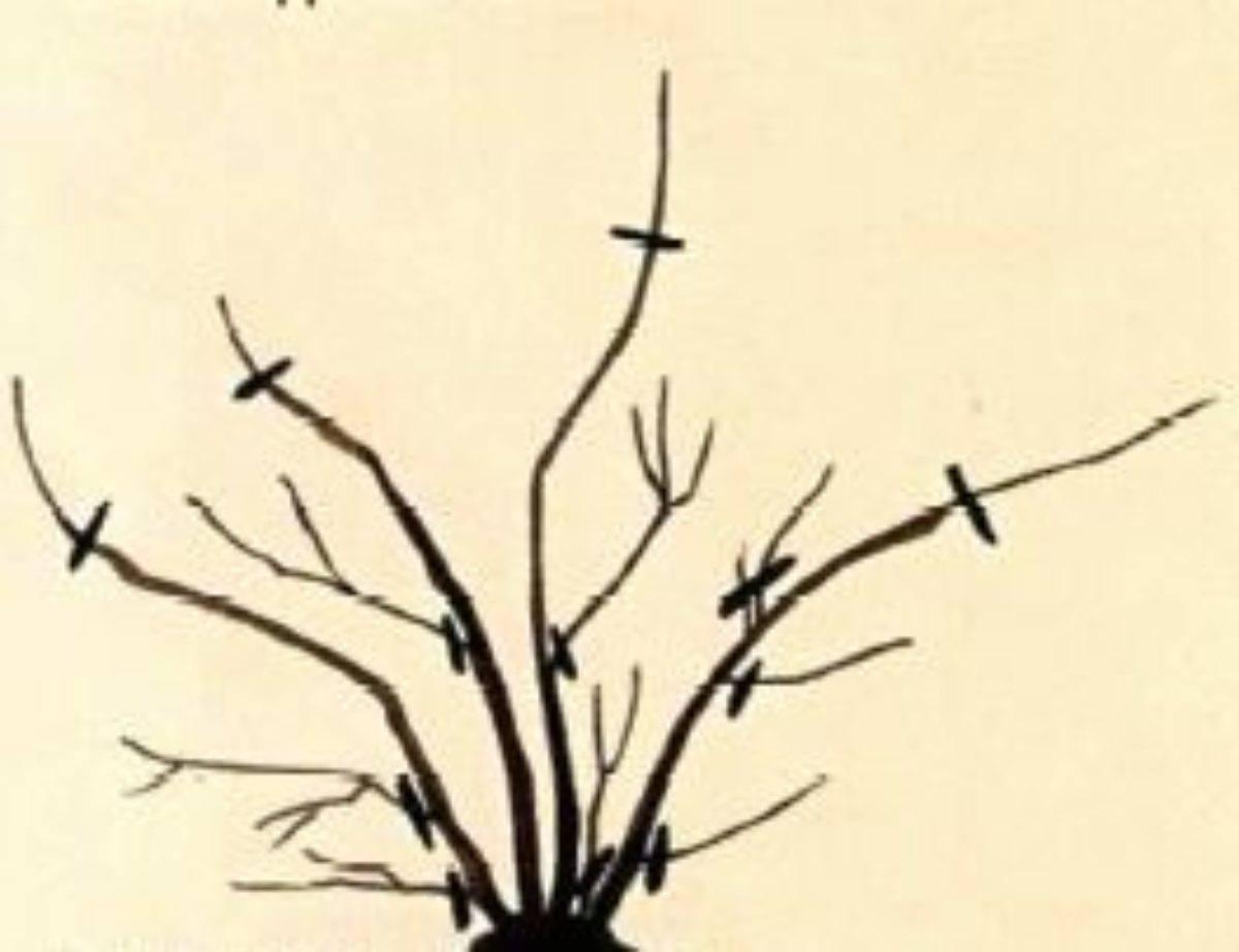 Советы для начинающих садоводов по обрезке деревьев осенью