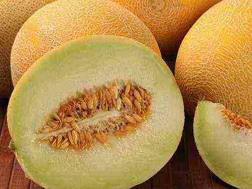Дыня скрещенная с ананасом. дыня ананасная: особенности культуры и ее сравнение с подобными сортами