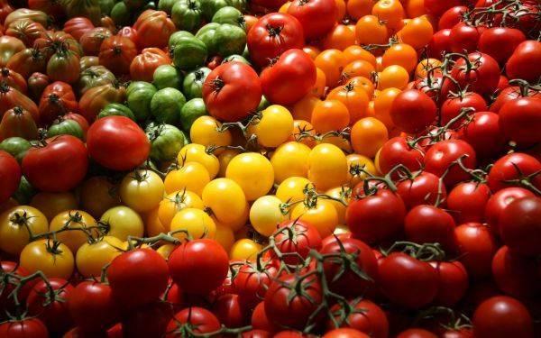 Сорта помидор для засолки и консервирования