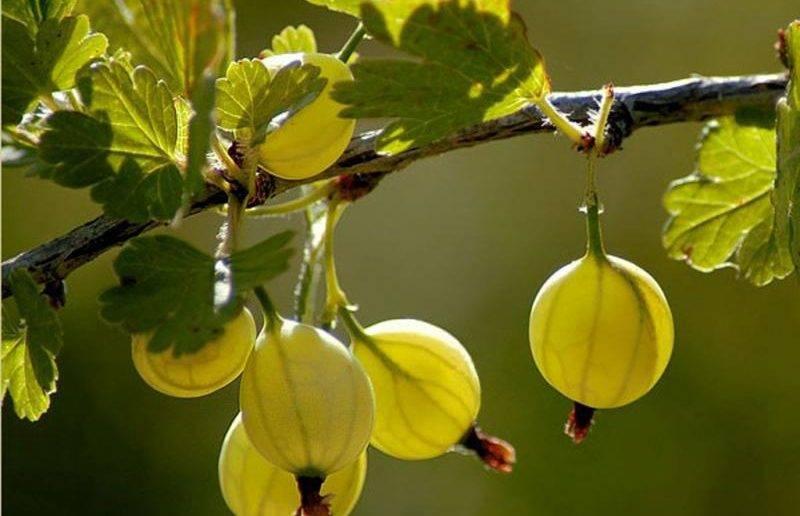 Пересадка клубники на новое место весной, летом и осенью: сроки и способы размножения