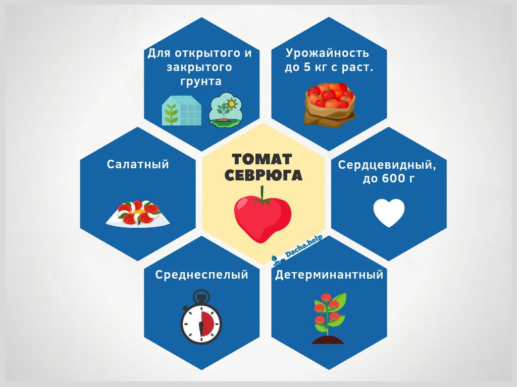 Идеальный для открытого грунта томат - севрюга: характеристика и описание сорта, фото - общая информация - 2020