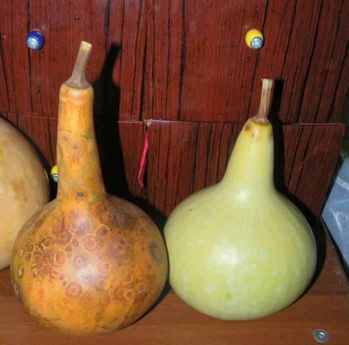 Описание бутылочной тыквы