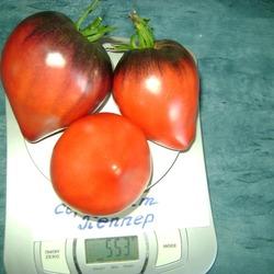Интересный сорт с алой окраской и фиолетовыми «погонами» — томат сержант пеппер: описание помидоров и характеристики