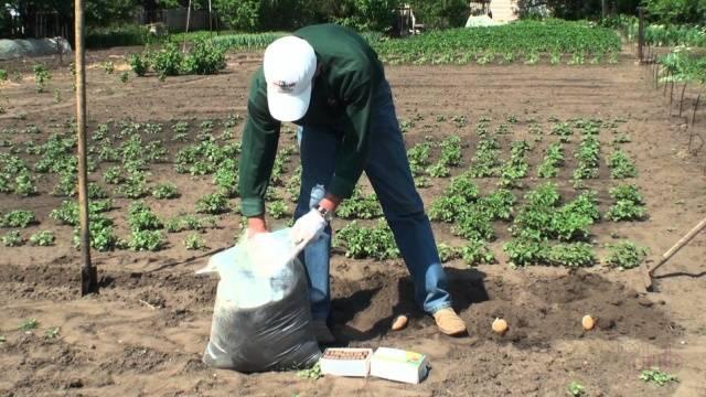 Борьба с фитофторой на картофеле. 3 народных способа как бороться с фитофторой на картофеле.   красивый дом и сад