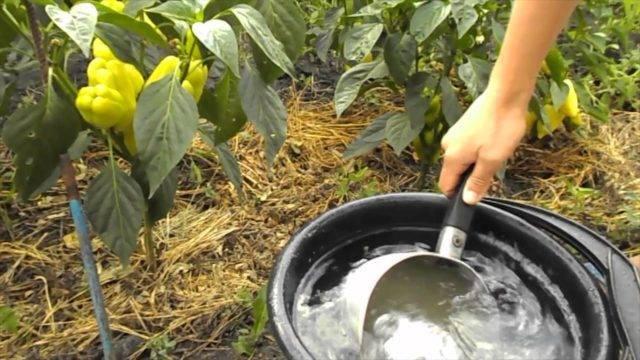 Зеленое удобрение из сорняков для подкормок винограда