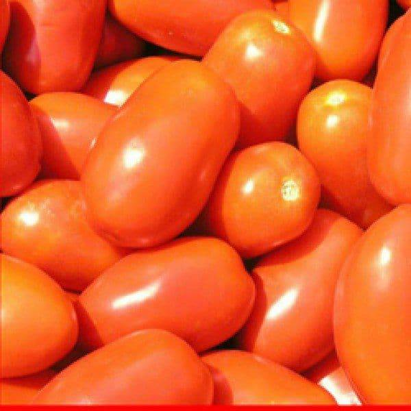 Сорт (гибрид) томата «бенито f1»: описание, характеристика, посев на рассаду, подкормка, урожайность, фото, видео и самые распространенные болезни томатов