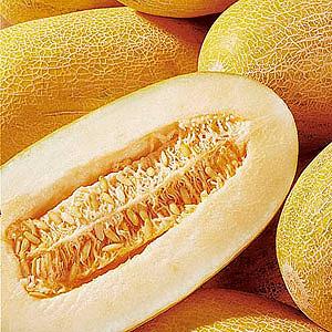 Дыня сибирская медовая f1 — описание сорта, фото, отзывы, посадка и уход