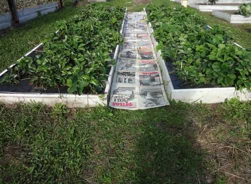 Какой материал постелить под щебень, чтобы не росла трава — рассказываем обстоятельно