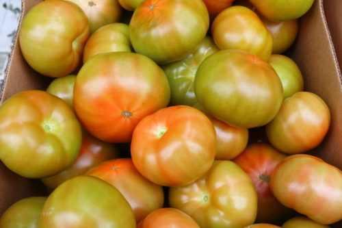 Как сохранить зеленые помидоры на зиму свежими