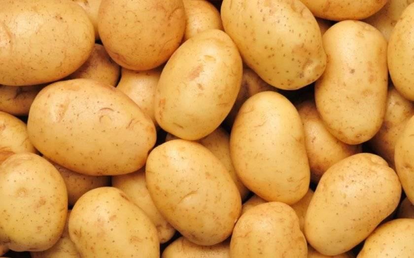 Сорт картофеля «аризона» – описание и фото