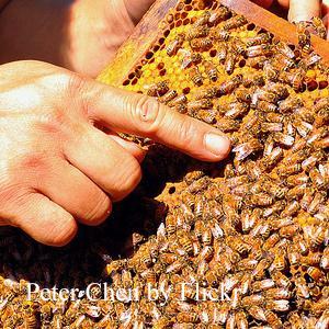 Маточный мед – вкусный и натуральный биологический стимулятор!