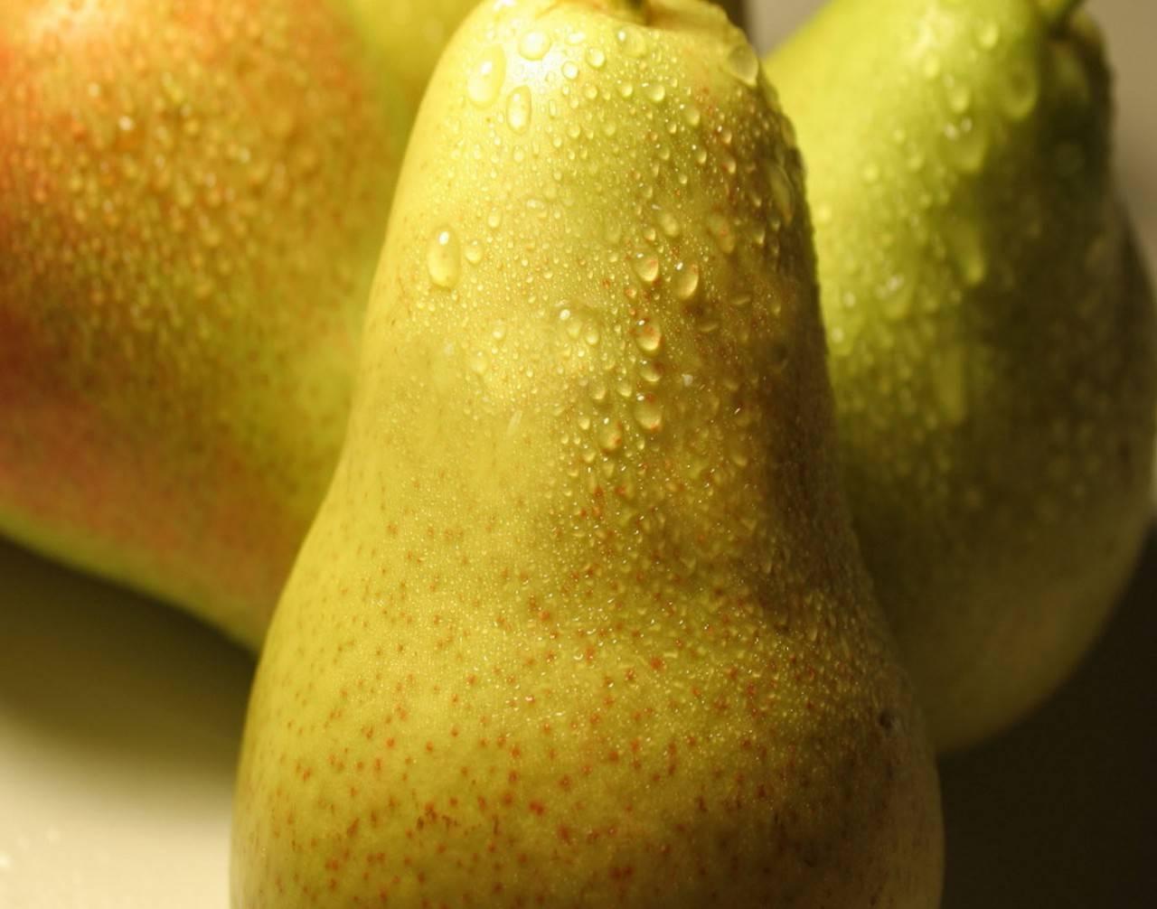 Описание груши сорта «вильямс»: характеристики сорта, фото, отзывы садоводов