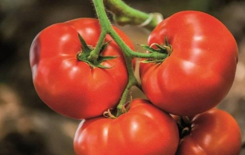 Урожайность с характеристиками и описанием сорта томата кострома