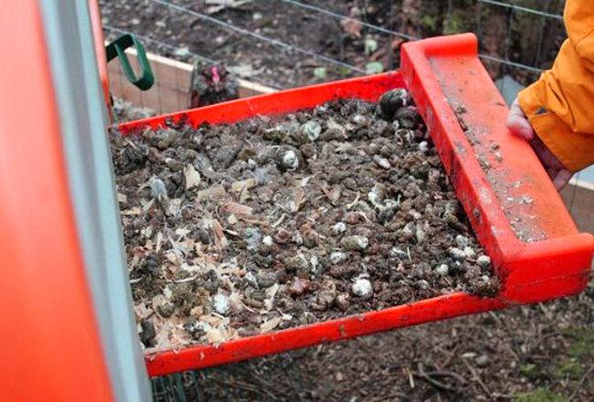 Как разводить куриный помёт для подкормки растений