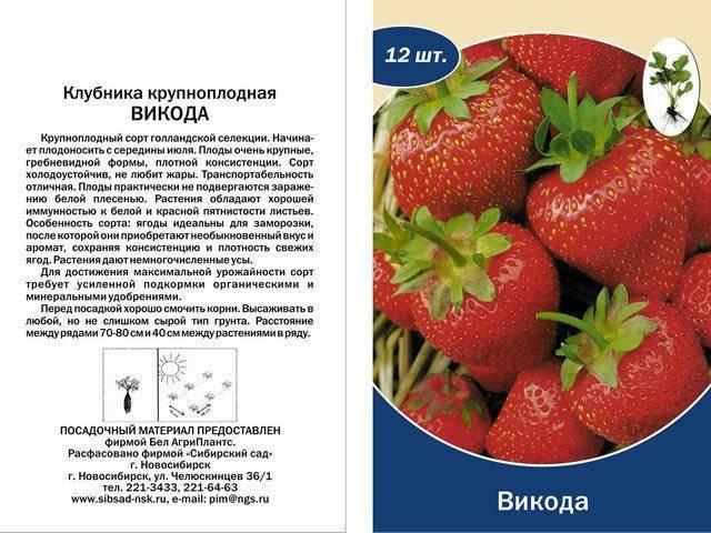Клубника «викода» — описание сорта и его особенности, выращивание и уход