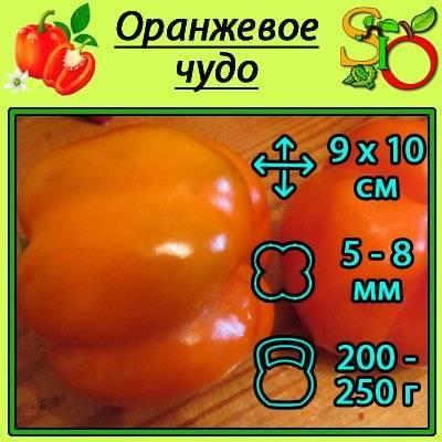 Болгарский перец красный куб: описание тепличного сорта, агротехника, реальные отзывы