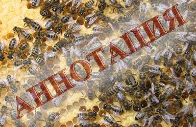 Что делают пчёлы осенью?