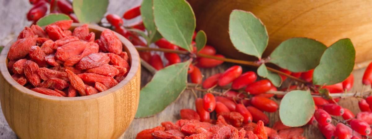 Барбарис – когда собирать ягоды?
