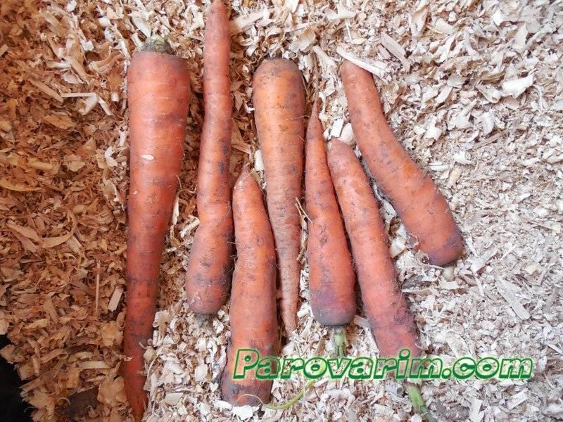Где и как можно сохранить морковь на зиму в домашних условиях в квартире?