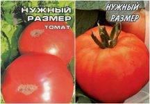 Томат русский размер f1: описание сорта, особенности выращивания и ухода