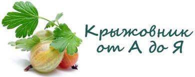 Крыжовник ксения: характеристика, особенности выращивания и размножения