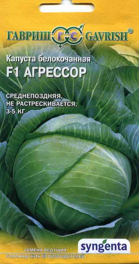 Капуста агрессор — сорт, дающий стабильный урожай в экстремальных условиях