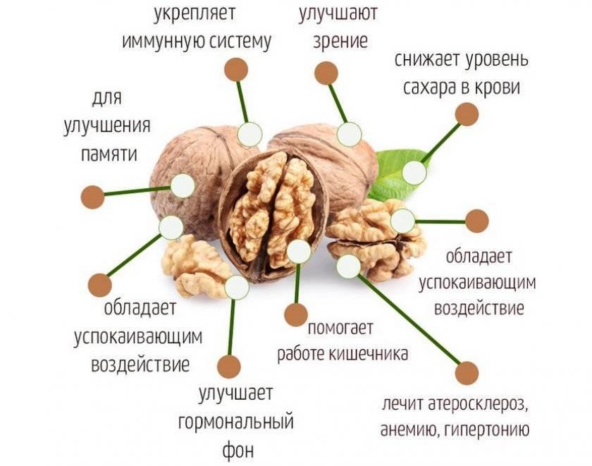 Грецкие орехи при беременности: польза и вред на ранних и поздних сроках