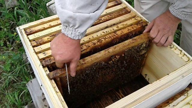 Как правильно подготовить пчел к зимовке: правила и полезные рекомендации