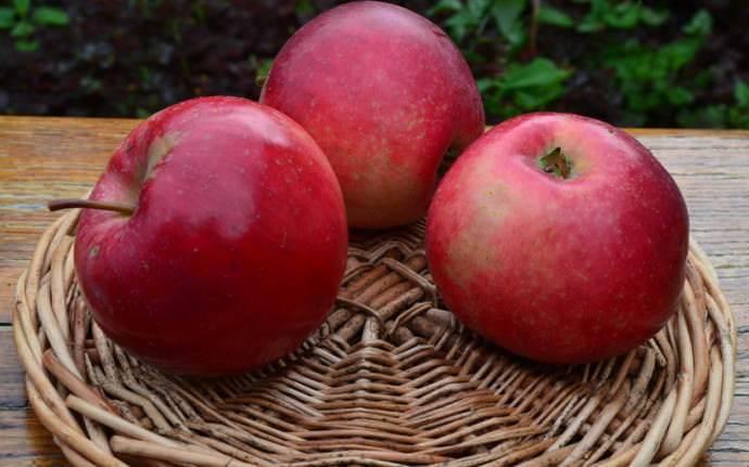 Условия посадки яблони краса свердловска. описание и фото