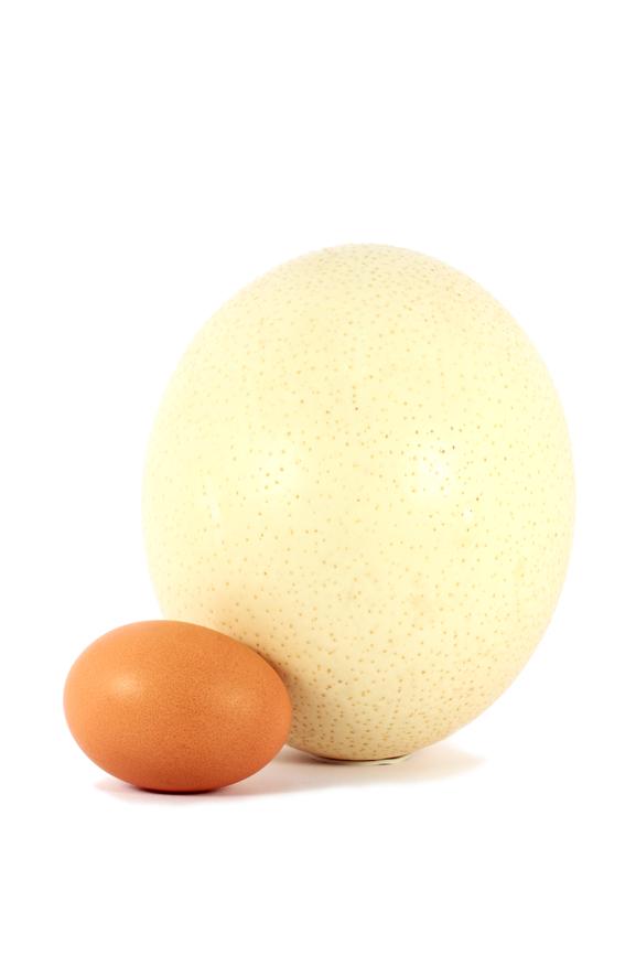 Сколько дней голуби высиживают яйца - общая информация - 2020