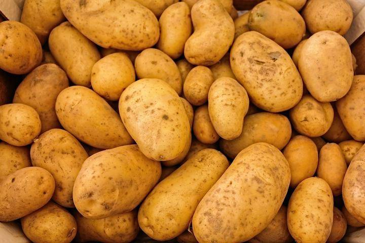 Как и чем лучше обработать картофель перед посадкой?