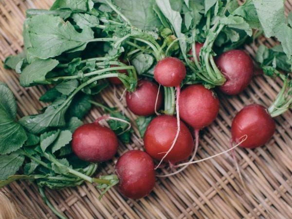 Томат мечта алисы (alice s dream): характеристика и описание сорта, отзывы и фото урожайности помидоров