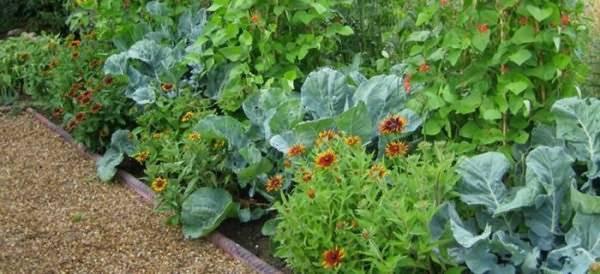 Сажать укроп на одной грядке: с чем можно и нельзя, хорошо ли рядом со свеклой, а также совместимость с другими растениями и культурами и лучшие соседи на огороде